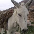 , خر کویر مرکزی