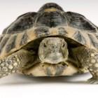 , لاکپشتها را اعدام نکنیم