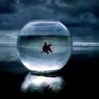 , تشنگیِ ماهی در آبِ تشنه
