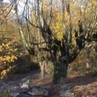 , جنگل