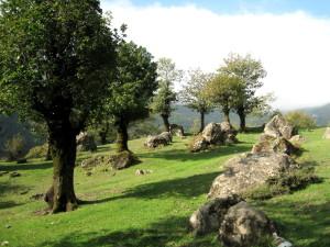 بلوت (بلوط) جنگل هیرکانی - تالش